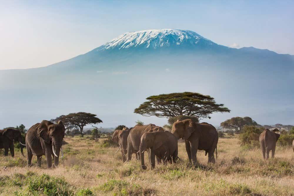 La cima innevata del Kilimangiaro