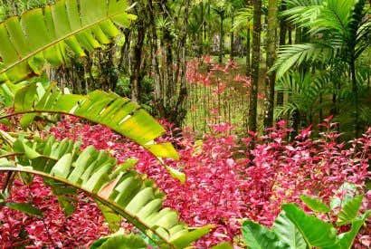 Qué ver en Martinica, la isla de las flores