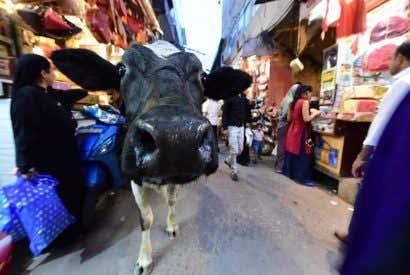 Que voir à Jaipur, la capitale du Rajasthan