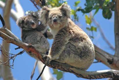 Must See Australia: Top 6