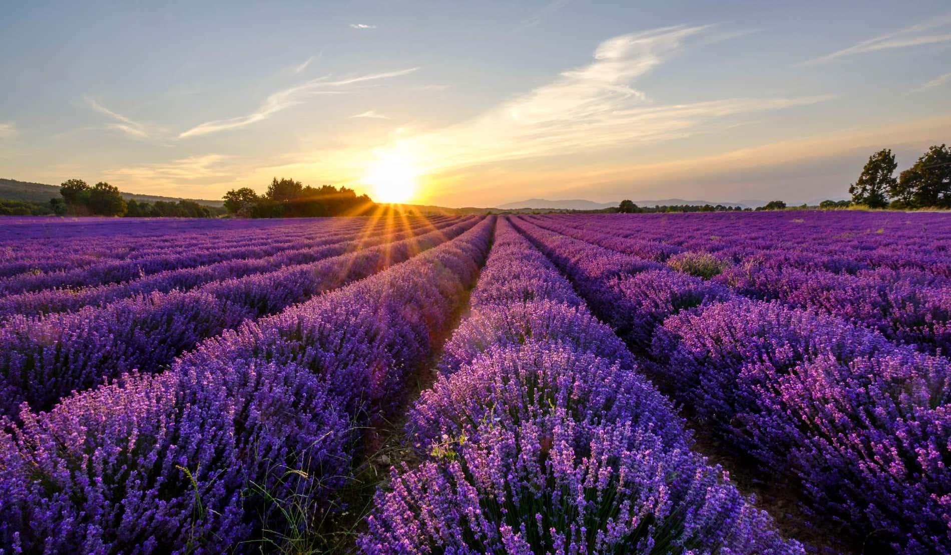 Que voir en Provence ?