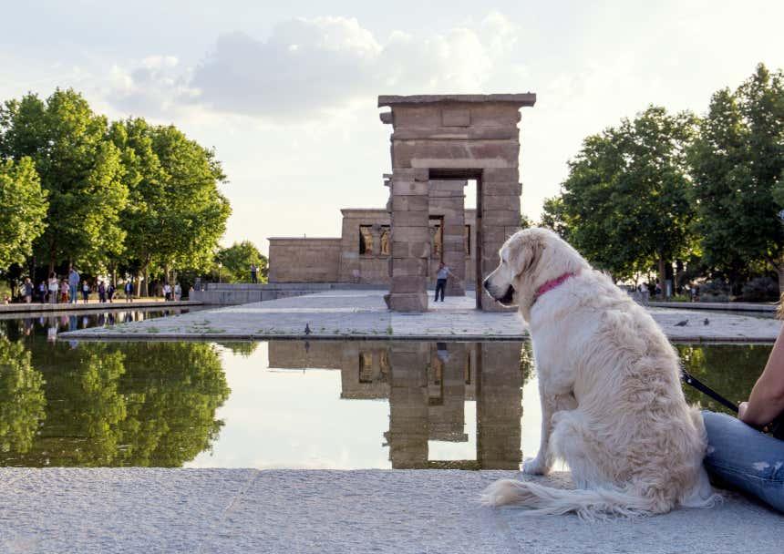 Perro sentado de espaldas en el Templo de Debod de Madrid.