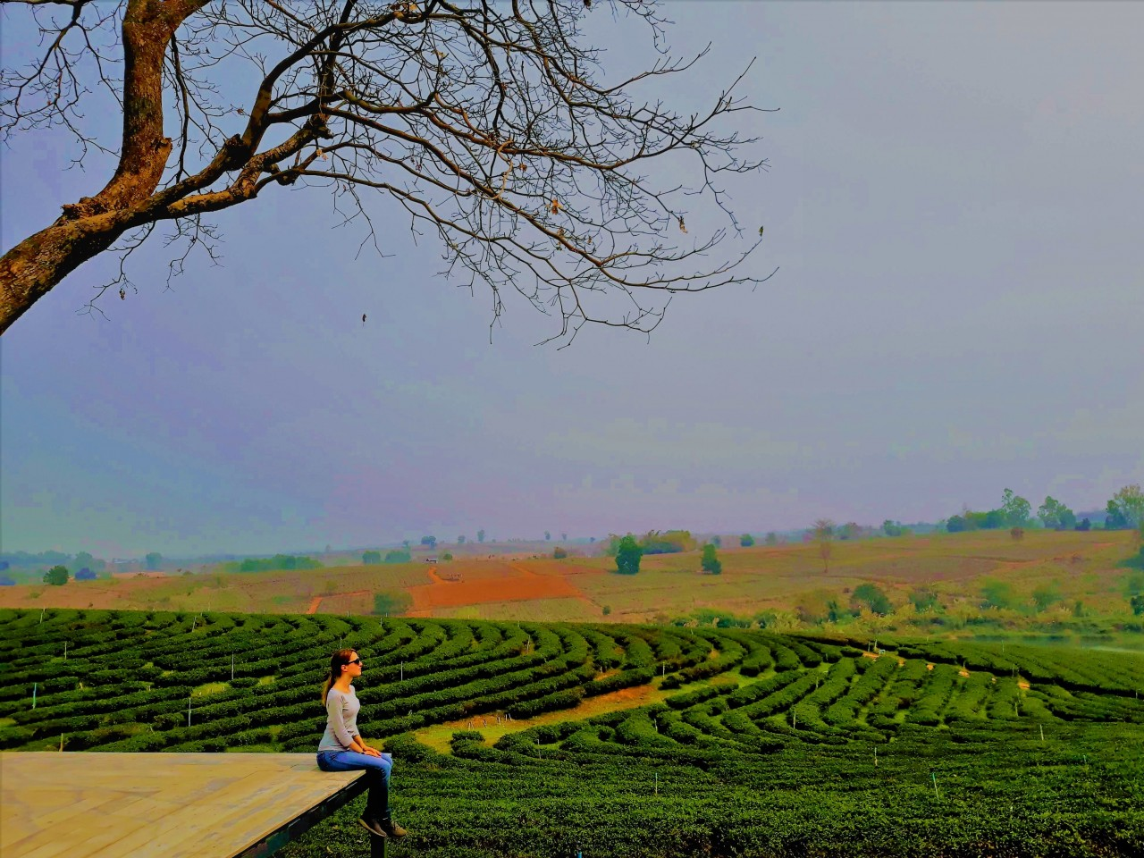 Anna Bondareva, Destination Manager de Civitatis, sentada junto a las extensas plantaciones de té de Tailandia.