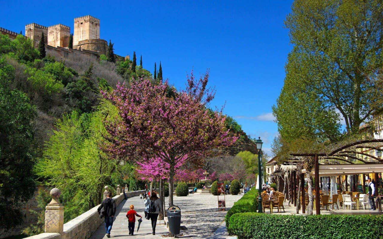 Vistas del Paseo de los Tristes lleno de árboles en flor con la Alhambra de Granada de fondo, que forma parte de las calles más bonitas de España