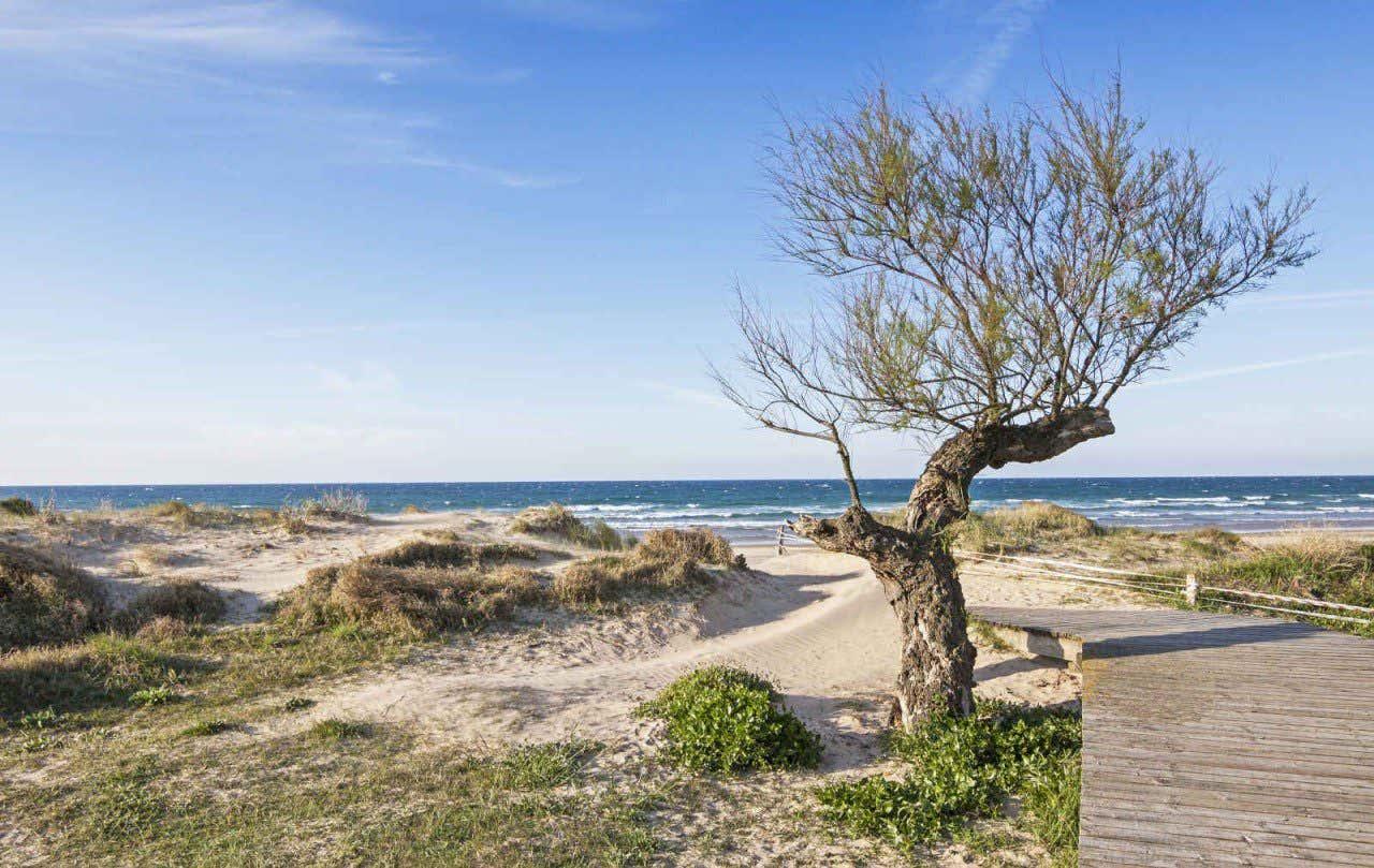 Naturaleza en la playa de Berria, en Santoña