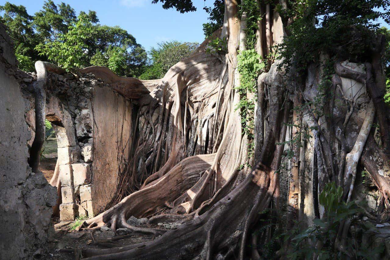 Prison de Petit-Canal envahie par les arbres
