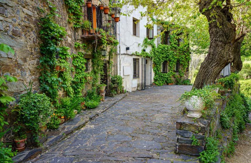 Tres casas con vegetación en la fachada y macetas en las entradas en una calle empedrada de Patones de Arriba .