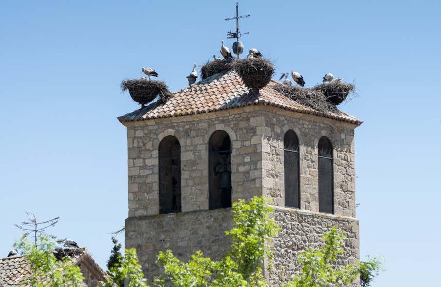 Nidos y varias familias de cigüeñas en la torre de una iglesia de piedra en Soto del Real.
