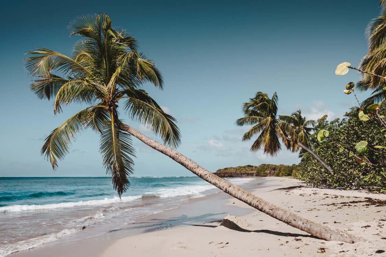 Parmi les plus belles plages de France se trouve la Plage des Salines en Martinique, un paradis sous les cocotiers.