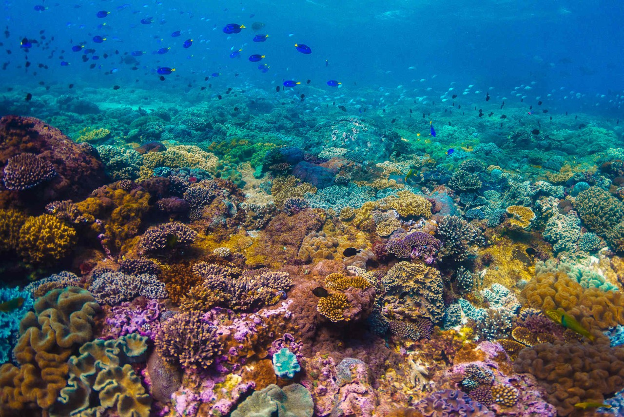 Colorido arrecife en la Gran Barrera de Coral australiana
