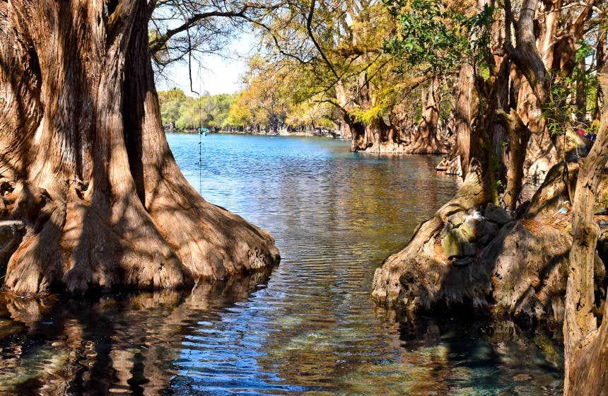 El lago de Camécuaro y sus imponentes ahuehuetes.