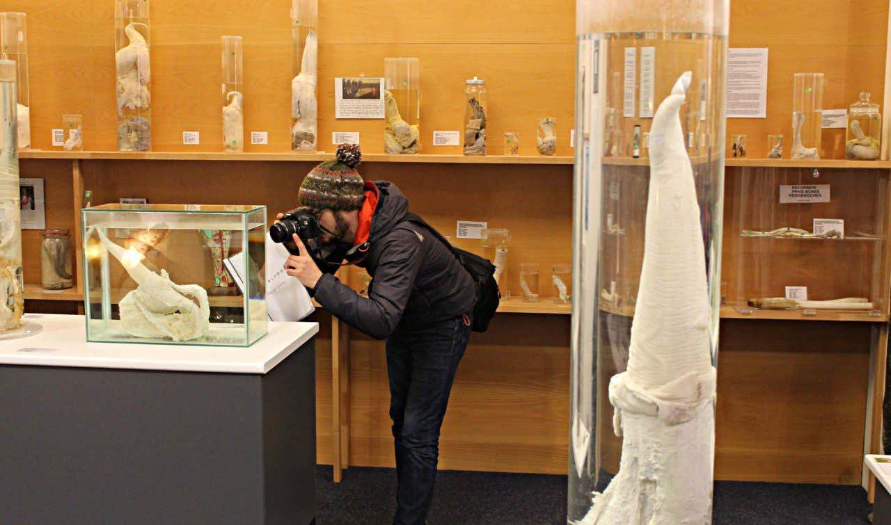 Visitante haciendo fotos de uno de los ejemplares de penes expuestos en el Museo del Falo en Reykjavik en Islandia