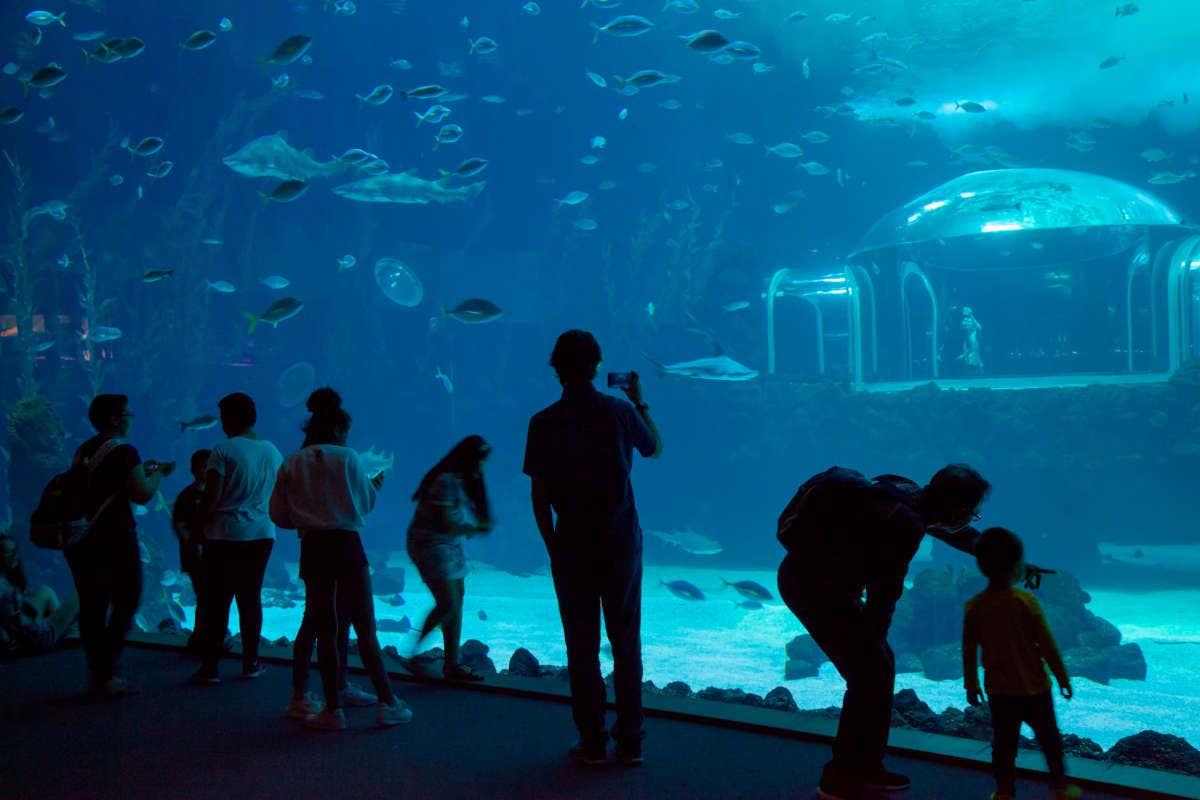 Gente contemplando uno de los acuíferos de Poema del Mar