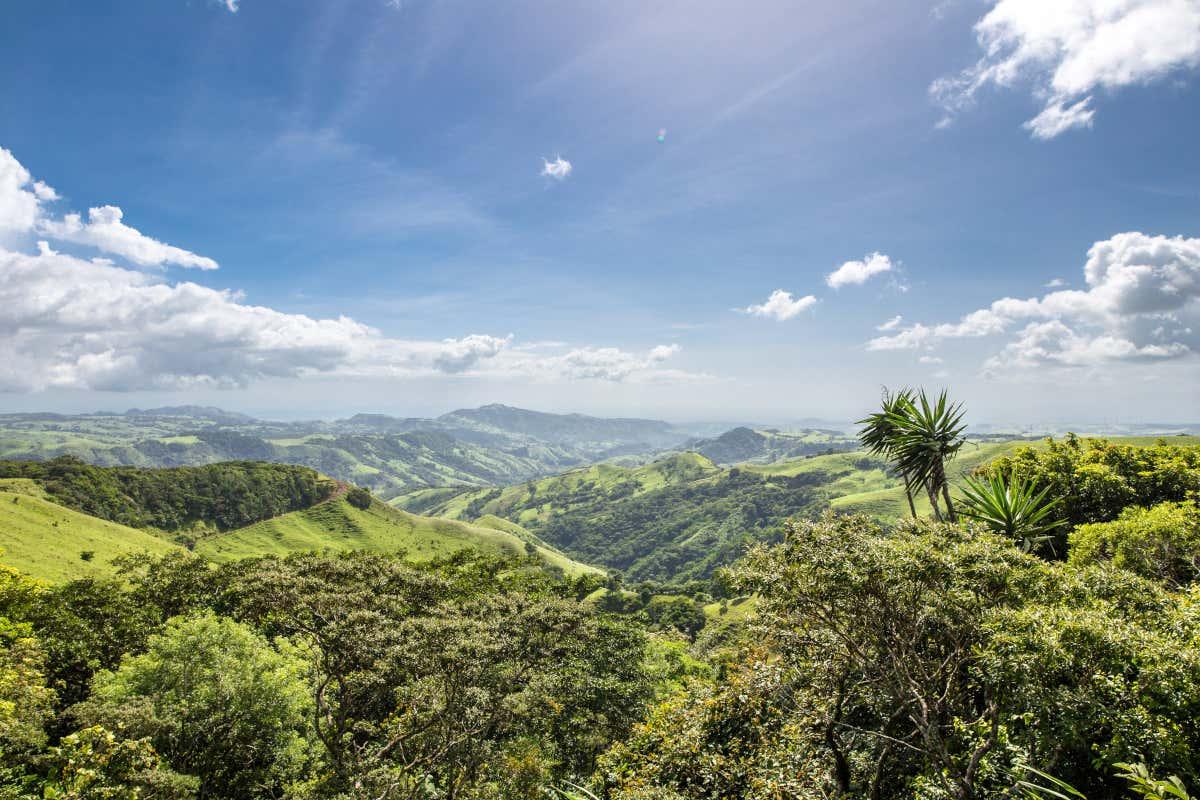 Estampa de la Reserva Biológica Bosque Nuboso Monteverde.