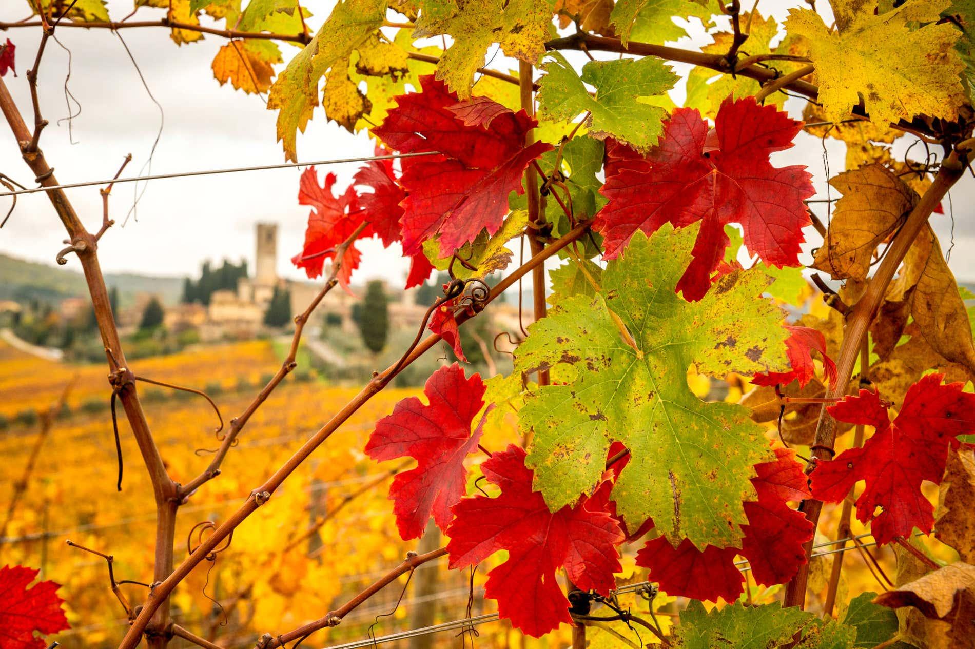 Los mejores viñedos de la Toscana