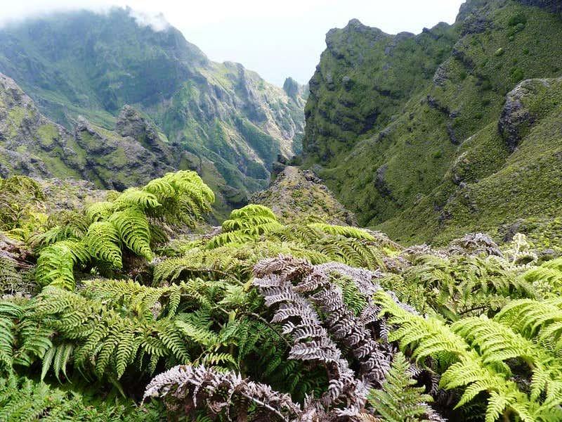 Vegetación en la isla Alejandro Selkirk.